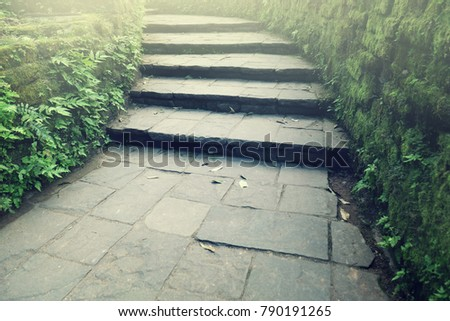 Stairway to the natural forest at the greenery outdoor garden
