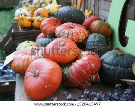 Stall sells colorful ornamental pumpkins.