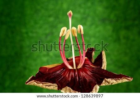 Stamen and pollen of flower