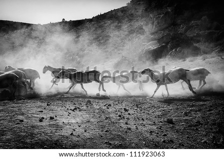 stampede of a herd of sheep - stock photo