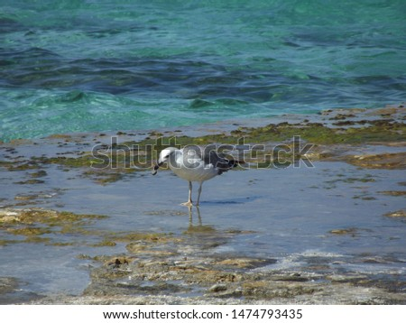 standing bird sea ​​gull on rock. albatross on water close up #1474793435