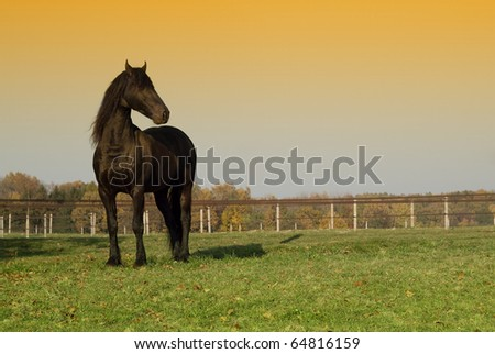 Standing black horse on grass