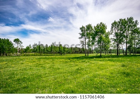 Standing in a large grassy field covered with yellow wildflowers. Sunny spring day looking across at the birch tree filled forest and cloudy blue skies.