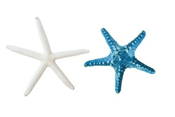 star fish isolated on white or decorative on your ad.