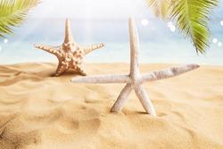 Star-fish On Sandy Tropical Beach Near Water