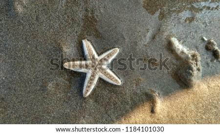 star fish pic
