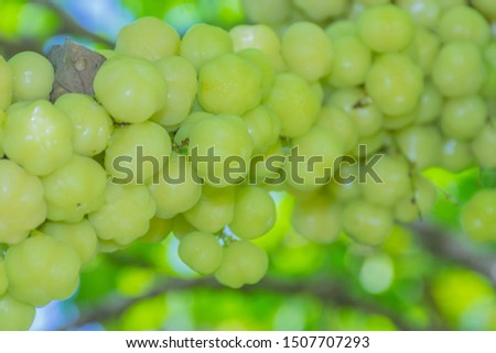 Star gooseberry fruit , with vitamins and sour taste.