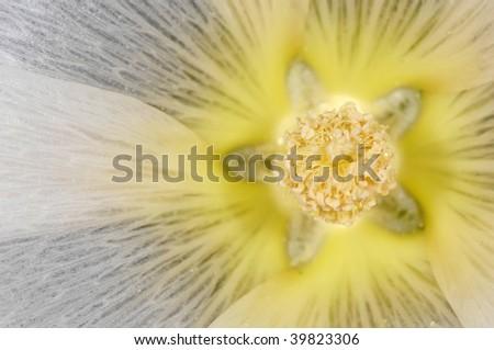 Star-like interior part of beautiful blossom - stock photo