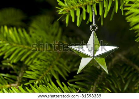 Star shape Christmas decoration in real tree