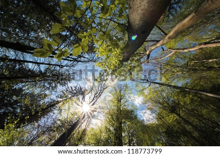 Star shaped sun rays passing through the green leaves of the high trees in the virgin forest - stock photo