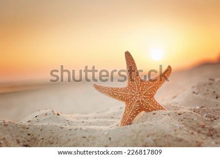 starfish #226817809