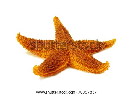 Starfish against a white background
