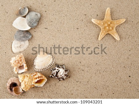 starfish and cockleshells on sand
