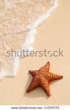Starfish and ocean wave on sandy tropical beach