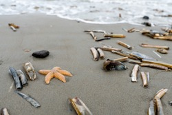 Starfish and other shells at the shore of a beach in the Netherlands on a cloudy day in the summer with sand and water
