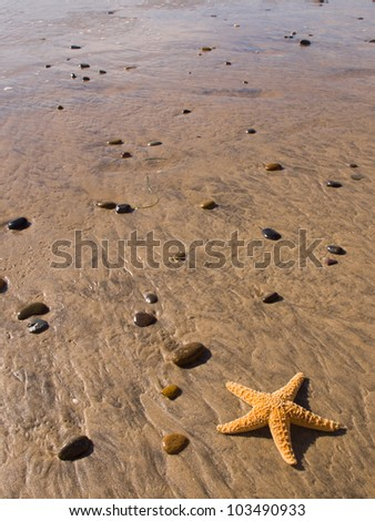 Starfish and Rocks on the Beach