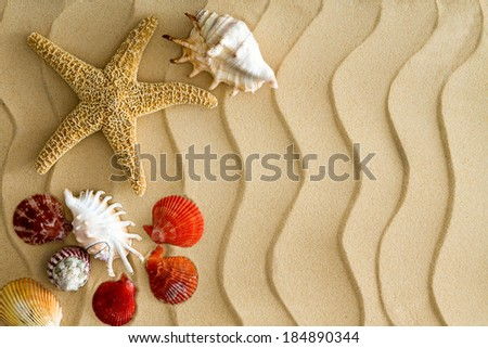 Starfish and sea shells on the wavy beach sand with copy space on the right side