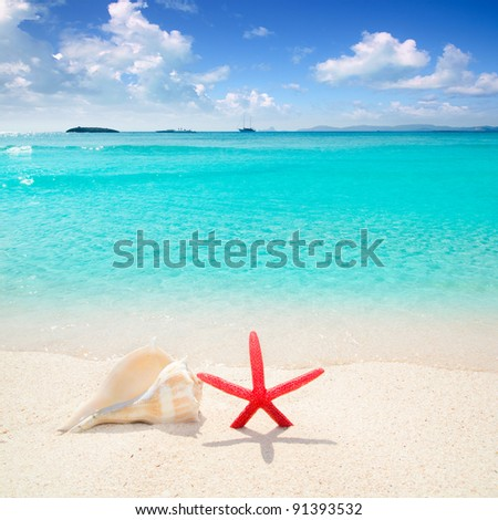 Starfish and seashell in white sand beach with turquoise tropical water