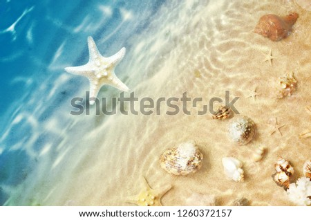 Starfish and seashell on the summer beach in sea water. Summer background. Summer time #1260372157