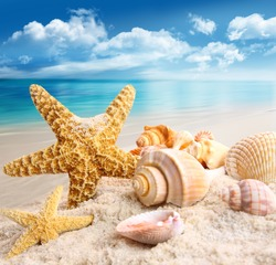 Starfish and seashells on the beach with blue sky