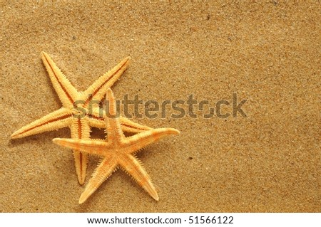 starfish and shells on the beach, vacation memories