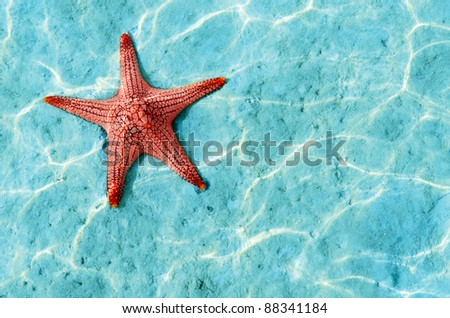 Starfish in blue water with light reflection.