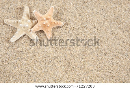 starfish in the beach sand - copy space