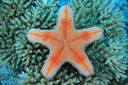 Starfish in the coral reef