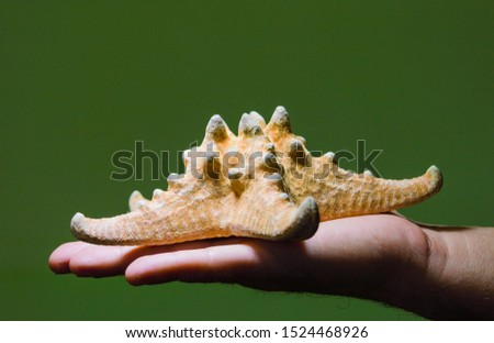 starfish in the palm, starfish in hand on a green background, starfish on the palm, starfish shell, green background