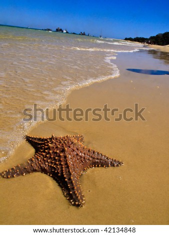 Starfish in the surf at Moreton Island