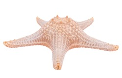 Starfish isolated on a white background with clipping path , dry-specimen animal marine .