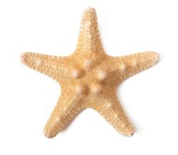 Starfish isolated on white background