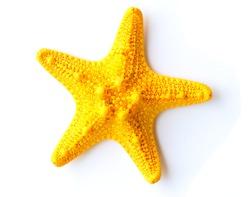 Starfish isolated on white background.