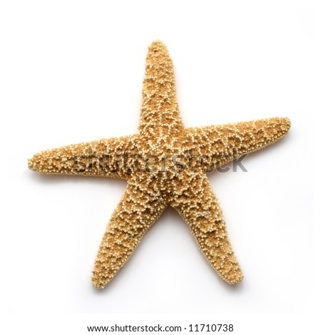 Starfish isolated on white. Sea stars and shells collection.