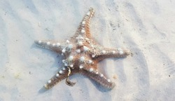 Starfish lying on the sand in the sea.