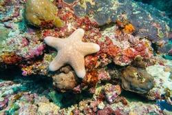 Starfish on a coral reef. Maldives.