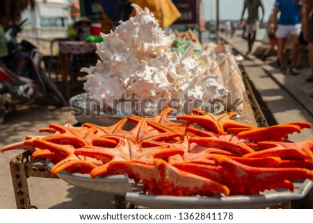 Starfish on a plate for sale with shells in background, picture from Phu Quoc Island Vietnam.