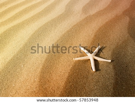 Starfish on a sand beach - stock photo