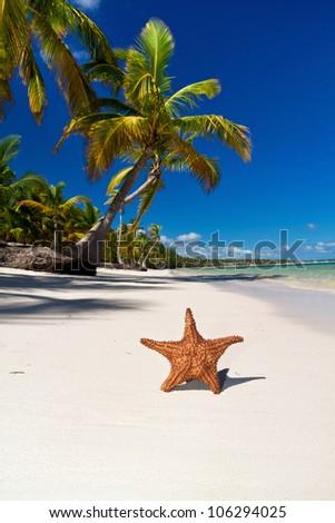 Starfish on caribbean sea beach with palms, Dominican Republic