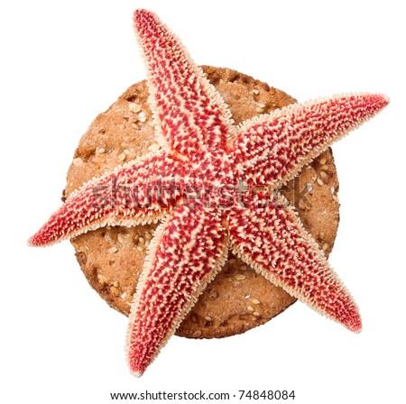 Starfish on crisp toast isolated
