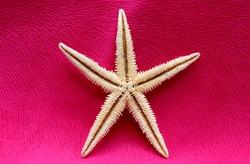 starfish on red fabric background