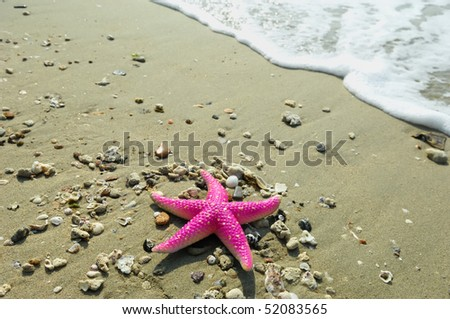 starfish on reef seacoast