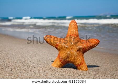 Starfish on sandy beach in summer day