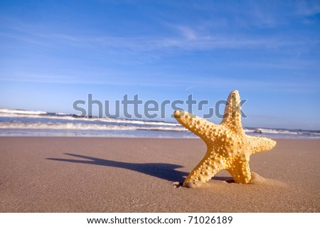 Starfish on summer sunny beach. Travel, vacation concepts