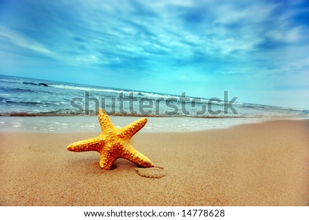 Starfish on the Beach - Best for Web Use - - stock photo