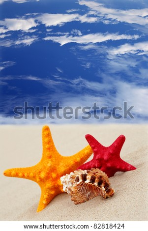 Starfish on the beach on blue sky background