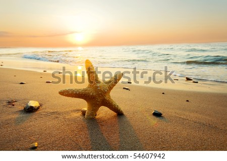 Starfish on the beach. Summer time