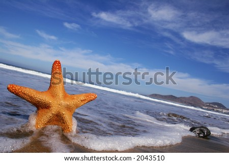 Starfish on the beach with blue sky, wave and foam