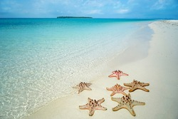 Starfish on the beach with clear blue sea