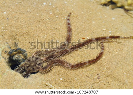 Starfish on the beautiful beach.